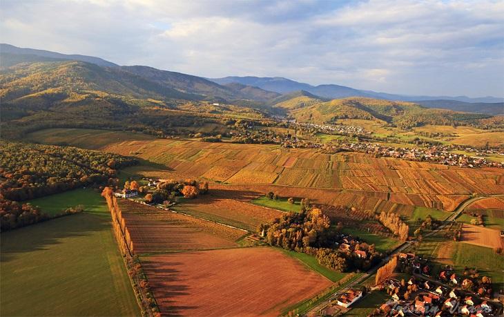 route des vins d'alsace 2
